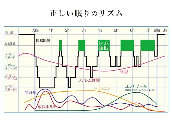 グラフ 正しい眠りのリズム